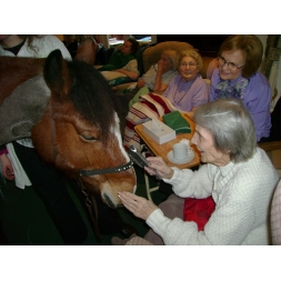 Rupert the Horse at Maesbrook Care/Nursing Home in Shrewsbury, Shropshire